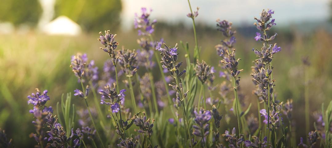 Kräuter für Naturpräparate zum online bestellen